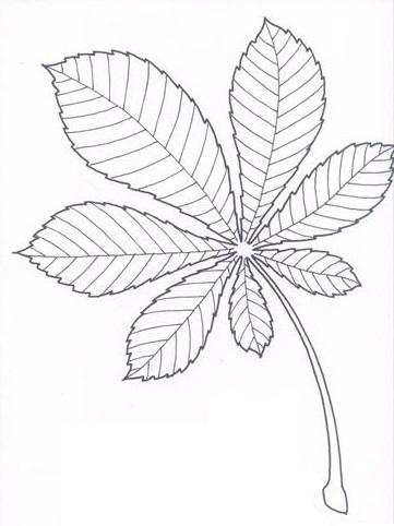 list kaštanu (jírovec maďal)